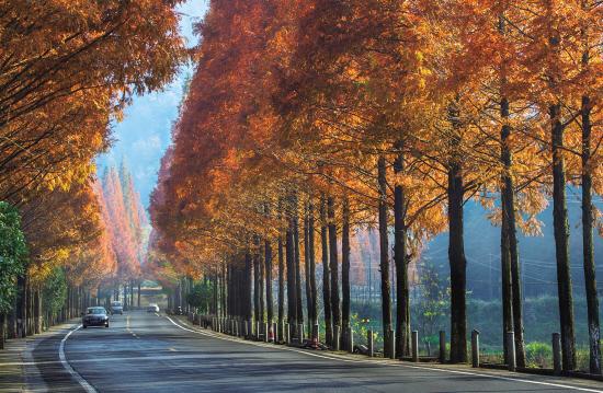 """以路为媒 以美为介 永康""""美丽公路+""""带给经济新活力"""