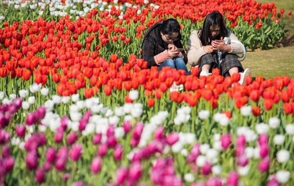 院士公园郁金香刷爆朋友圈 鄞州四季都有花可赏