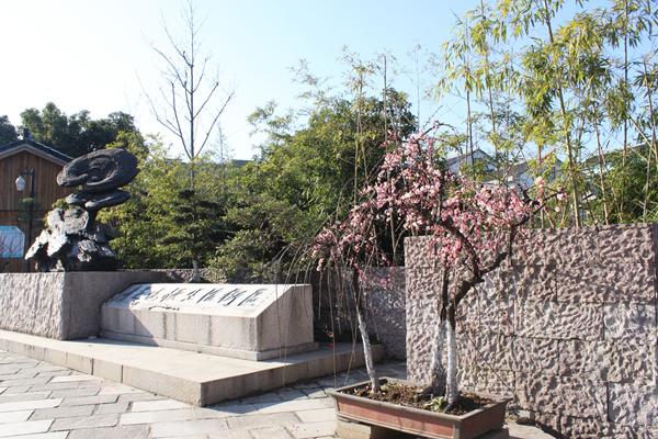 梅花盆景惹人爱