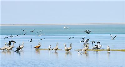 青海湖迎来开湖季